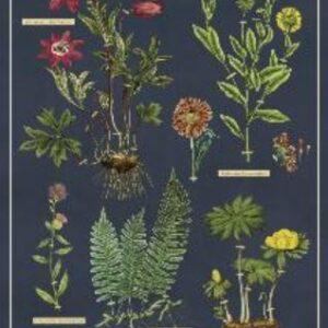 poster – affiche Cavallini herbier