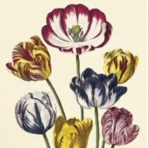 Poster – affiche tulipe 2