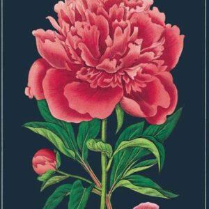 Poster – affiche botanique