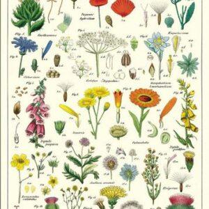 poster – affiche fleurs sauvages