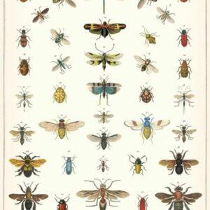 poster – affiche histoire naturelle insectes