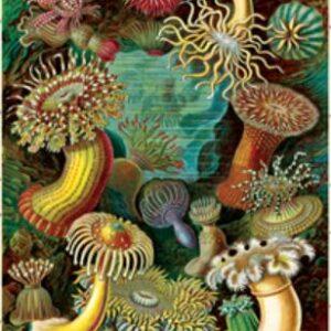 Poster – Affiche Cavallini anémones de mer