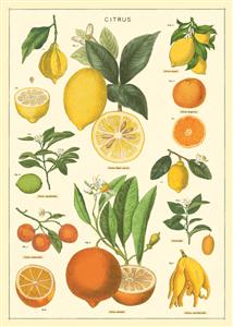 """Thème """"Planche naturelle de Citrons"""" d'après les archives de Cavallini."""