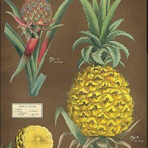 """Affiche 50 X 70cm """"Ananas"""""""